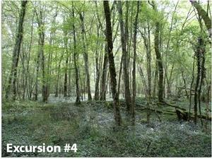 Haye forest